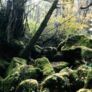苔むした森林